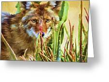 Coyote In The Aloe Greeting Card