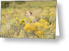 Coyote In The Chamisa Greeting Card