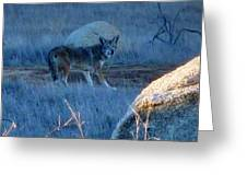 Coyote Wild Greeting Card