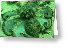 Cozumel Octopus Greeting Card