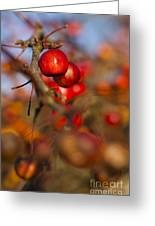 Crab Apple Bright Greeting Card