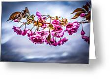Crab Apple Tree Greeting Card