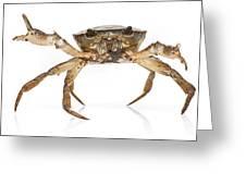 Crab Suriname Greeting Card