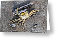 Crab With A Feather Greeting Card
