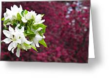 Crabapple Blooms Greeting Card