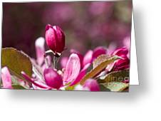 Crabapple Bud Greeting Card