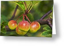 Crabapple Bunch Greeting Card