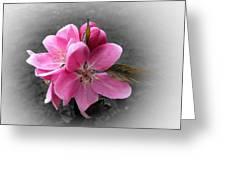 Crabapple Flower Greeting Card