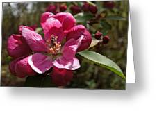 Crabapple Insect Greeting Card