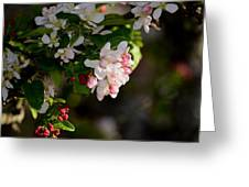 Crabapple Intricacies Greeting Card