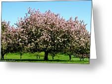 Crabapple Orchard Greeting Card