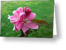Crabapple Portrait Greeting Card