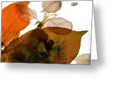 Crabapple Rose I Greeting Card