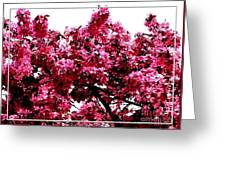Crabapple Tree Blossoms Greeting Card
