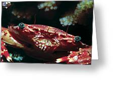 Crabs 1 Greeting Card
