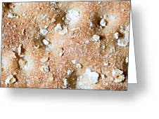 Cracker With Oats Greeting Card