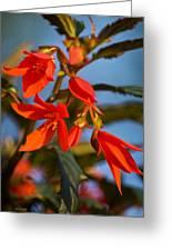 Crackling Fire Begonia Greeting Card