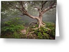Craggy Gardens Blue Ridge Parkway Asheville Nc - Enduring Craggy Greeting Card by Dave Allen