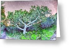 Craggy Gardens North Carolina Blue Ridge Parkway Autumn Nc Sceni Greeting Card