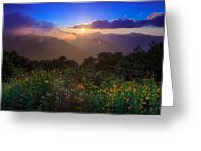 Craggy Gardens Wildflowers  Greeting Card