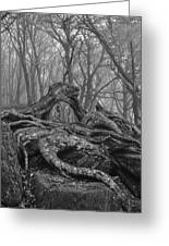 Craggy Roots Greeting Card