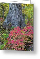 Cranberry Bush And Cottonwood Tree Greeting Card