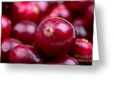 Cranberry Closeup Greeting Card by Jane Rix