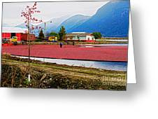 Cranberry Field Workers Greeting Card