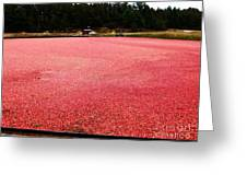 Cranberry Harvest 4 Greeting Card