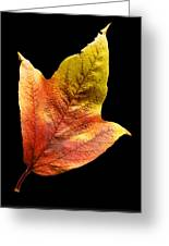 Cranberry Tree Leaf Isolated On White Greeting Card