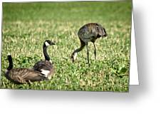 Crane And Friends Greeting Card