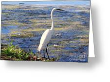 Crane At Pond Greeting Card