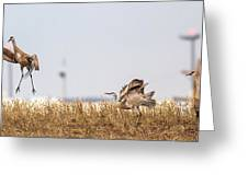 Crane Dance Greeting Card