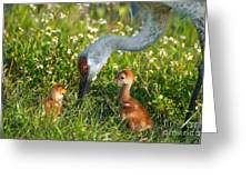 Crane Family Portrait Greeting Card