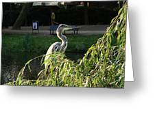 Crane In Evening Light Greeting Card