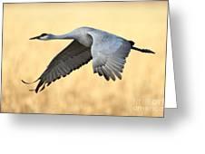 Crane Over Golden Field Greeting Card