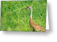 Crane Profile Greeting Card