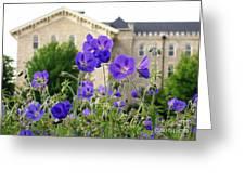 Cranesbill Blue Geranium Greeting Card
