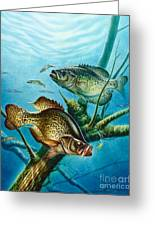 Crappie And Root Greeting Card