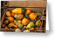 Crate Filled With Pumpkins And Gourts Greeting Card