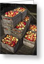 Crated Apples Greeting Card