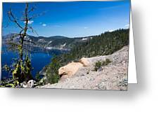 Crater Lake And Moss Covered Tree Greeting Card