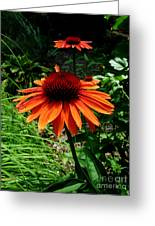 Crazy Daisey Two Greeting Card