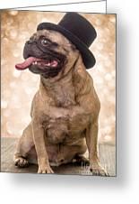 Crazy Top Dog Greeting Card
