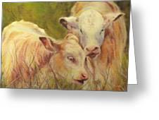 Cream And Sugar, Cows  Greeting Card