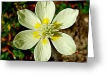 Cream Cup In Park Sierra-ca Greeting Card