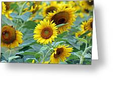 Cream Of The Crop Greeting Card