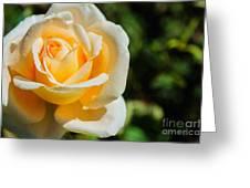 Cream Rose Greeting Card