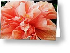 Creamsicle Crepe Paper Greeting Card