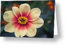 Creamy Dahlia Greeting Card
